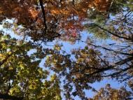 가을 낭만이 물씬~ 소백산 자락길에서 만나요