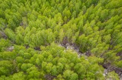 영양 자작나무숲'국민의 숲'으로 지정