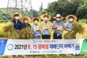 경북 영주서 올 첫 벼베기…'8‧15 광복쌀' 수확
