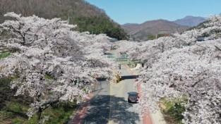 문경의 숨겨진 벚꽃 명소